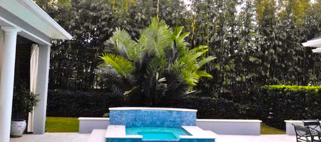 Bamboo accent by a pool