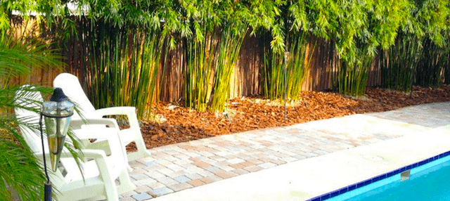 Poolside bamboo landscaping