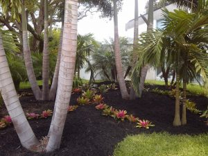 Landscaping services Tampa Bay